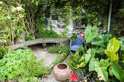 A seating area beside the barn surrounded by lush leaved cannas, Colocasia esculenta, dahlias and ferns. Dyffryn Fernant, Fis...