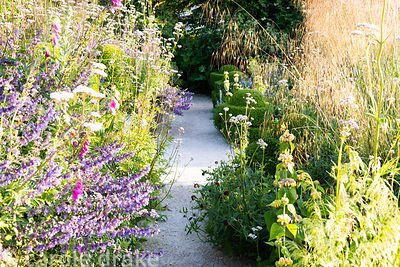 A path leads between densely planted borders containing Stipa gigantea, Valeriana officinalis, Digitalis purpurea, salvias an...