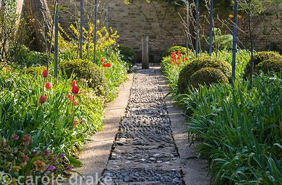 Pebble mosaic path runs below the replanted Laburnum Walk with red tulips 'Apeldoorn' in adjoining beds at Barnsley House, Ci...