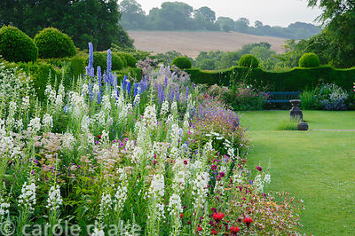 Herbaceous border brimming with white epilobiums, Monarda 'Gardenview Scarlet', Gillenia trifoliata, delphiniums and Knautia ...