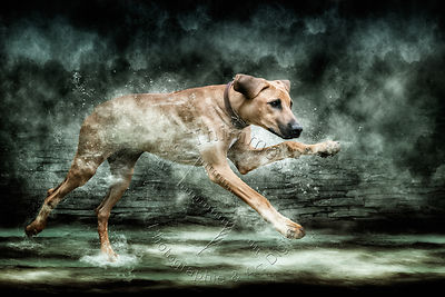 Art-Digital-Alain-Thimmesch-Chien-852