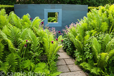 A window in a grey painted wall on one side of the flower garden, with lush ferns, crimson cirsiums and pink astrantias in th...