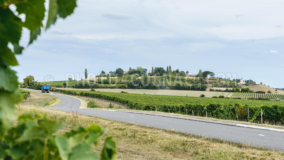 Vignoble charentais