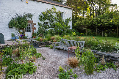Newly planted gravel area around the house includes grasses, Phlomis russeliana, alliums and Verbena bonariensis.
