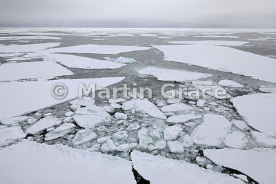 Sea ice at approximately Latitude S63°43', Longitude W56°17', Weddell Sea, Antarctic Peninsula,  Antarctica