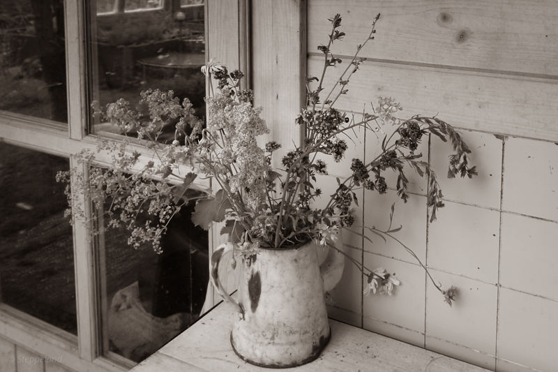 Summer garden in timeless sepia