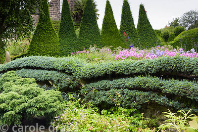 Espaliered cedar trained against a wall with Canal Garden behind featuring colourful flowers and a tall yew hedge clipped int...