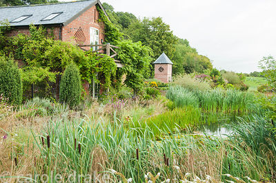 Wildlife pond surrounded by grasses, bulrushes and white Lysimachia clethroides, with barn and dovecote beyond. Rhodds Farm, ...