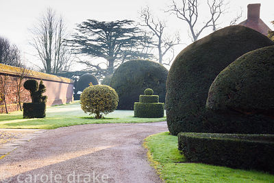 Topiary yew and holly at Doddington Hall, Lincolnshire in March