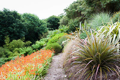 Astelias, phormiums, grasses and crocosmias line steep steps leading down towards the tree fern glade
