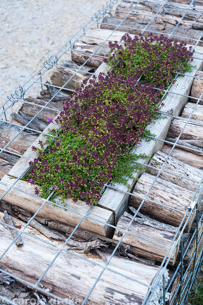 A low wall is made from log filled gabions with wooden planters set into their tops in which herbs are grown. The 'Garten' Ga...