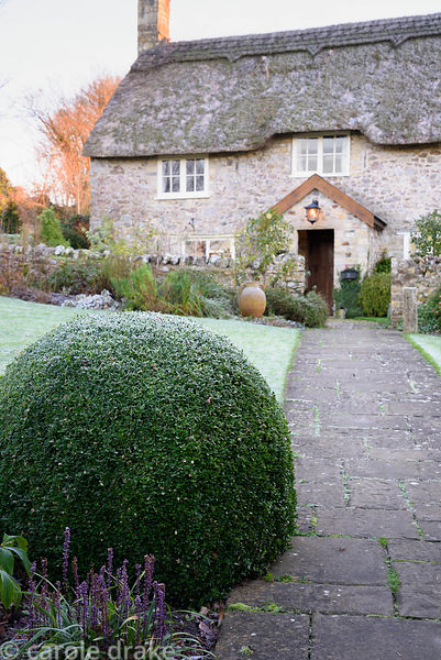 Frosted box mound with Liriope muscari beside a path leading to the front door of the thatched cottage