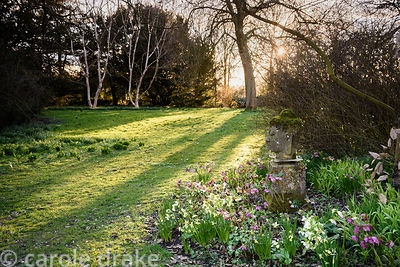 Hellebores, miniature daffodils and primroses around a carved stone head at Doddington Hall, Lincolnshire in March