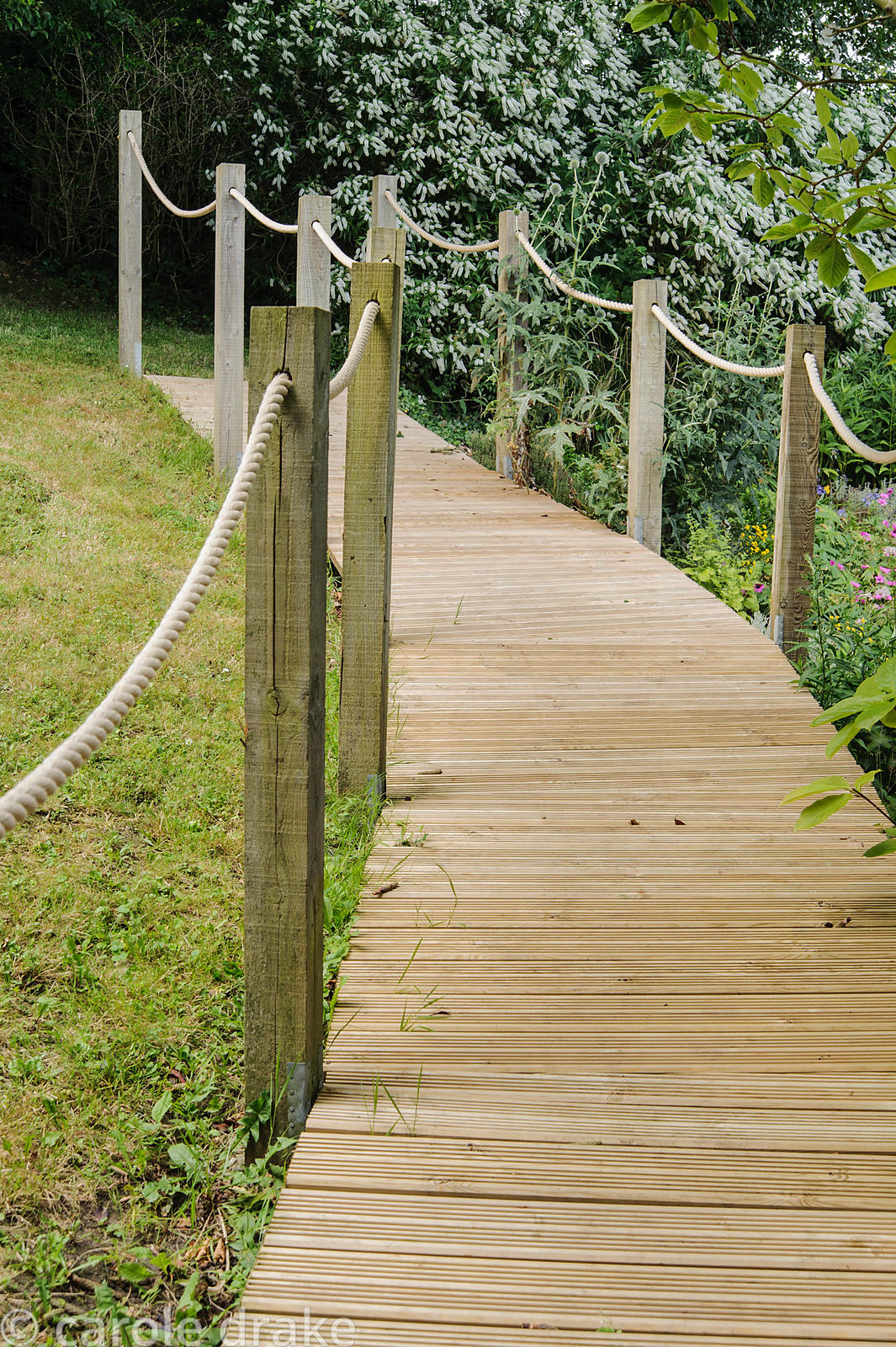 A sturdy boardwalk leads across damp ground down the sloping garden.