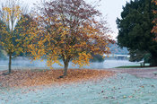 Frosty autumn morning at Marks Hall Gardens and Arboretum