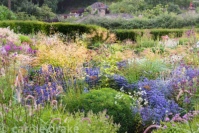 A river of blue Eryngium bourgatii 'Picos Blue' weaves in and out of grasses and other herbaceous perennials including Stipa ...