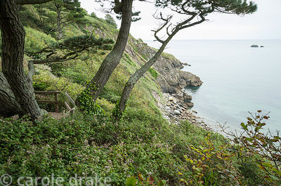 Pudcombe Cove below the garden where the D'Oyly Cartes and their visitors went swimming in a tidal pool. Coleton Fishacre, Ki...