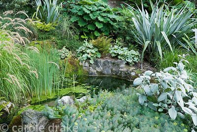 Small pond surrounded by foliage plants including Astelia chathamica, euphorbia, brunnera, plectranthus and pennisetum. Haddo...