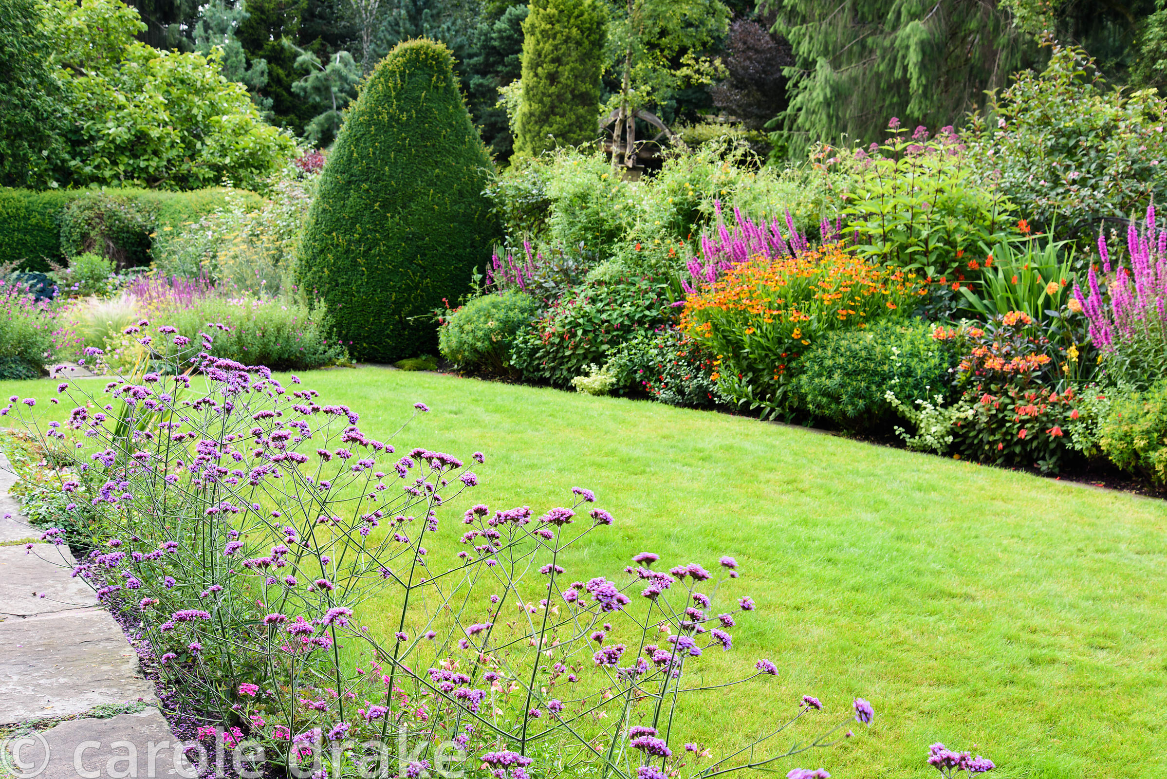 Front garden with a line of Verbena bonariensis between paving and lawn beside a border of rich oranges and pinks including h...