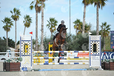 Oliva, Spain - 2019 November 17: Bronze tour 1m20 during CSI Mediterranean Equestrian Autumn Tour 2.(photo: 1clicphoto)