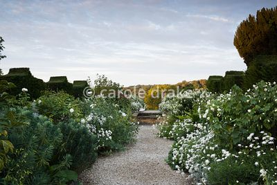 The White Garden at Bourton House, Moreton-in-Marsh in August at dawn with borders including Romneya coulteri, abutilon, Gale...