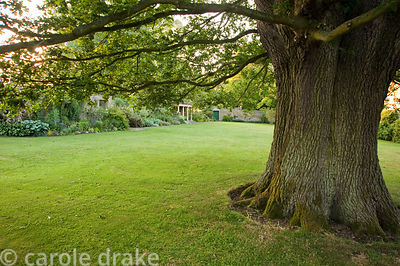 Old tree on the lawn with stone summerhouse beyond. Whalton Manor Gardens, Whalton, Northumberland, UK
