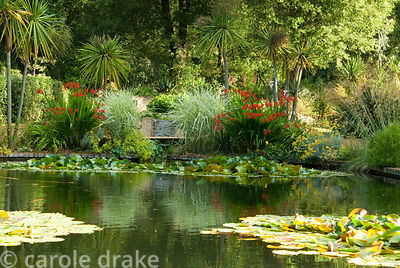 Victorian lily ponds, built in 1896 for irrigation, surrounded by cordylines, cabbage palms, and colourful watsonias, a South...