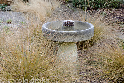 Chionochloa rubra around a salvaged birdbath. Barn House, Brockweir Common, Glos, UK