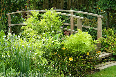 Wooden bridge surrounded by bamboo, day lilies, Lycnis coronaria 'Alba'. Poppy Cottage Garden, Roseland Peninsula, Cornwall, UK
