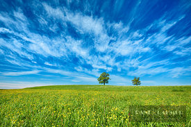 Oak and cirrus clouds (lat. quercus) - Europe, Germany, Bavaria, Upper Bavaria, Bad Tölz-Wolfratshausen, Degerndorf (Fünfseen...
