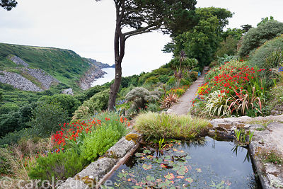 View down into Lamorna Cove from Chygurno, planted with phormiums, Crocosmia 'Lucifer', agapanthus, cordylines and succulents...