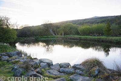 The pond has a base of natural clay and is left wild and natural around the edges, with a backdrop of Garn Fawr.