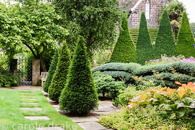 Yew pyramids along a path of paving stones set into lawn leading towards a wrought iron gate below a magnolia at York Gate Ga...