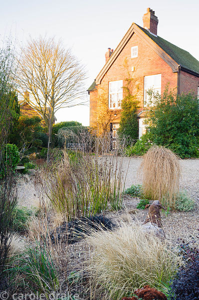 Gravel garden in front of the house includes small trailing conifer Larix decidua 'Puli', Ophiopogon planiscapus 'Nigrescens'...
