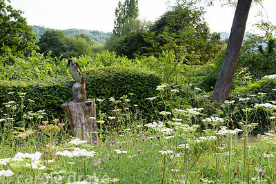 Tree stump with owl sculpture amongst a flowery meadow of cow parsley and common knapweed with the South Downs beyond, at Fiv...