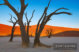 Dune impression with dead trees in Dead Vlei - Africa, Namibia, Hardap, Namib, Dead Vlei (Namib Naukluft National Park) - dig...