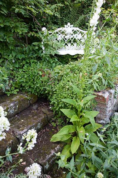 White wrought iron seat surrounded by self seeded foxgloves and white centranthus. Mindrum, nr Cornhill on Tweed, Northumberl...