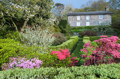 Garden in front of the house contains box edged compartments, and shrubs including bright azaleas. Plas yn Rhiw, Rhiw, Pwllhe...
