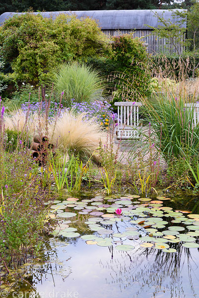 Naturalistic pool in a rural garden in Nottinghamshire in September surrounded by planting including Dierama pulcherrimum, St...