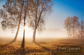 Misty mood with trees and sun - Europe, Germany, Bavaria, Upper Bavaria, Bad Tölz-Wolfratshausen, Benediktbeuern, Bichl - dig...