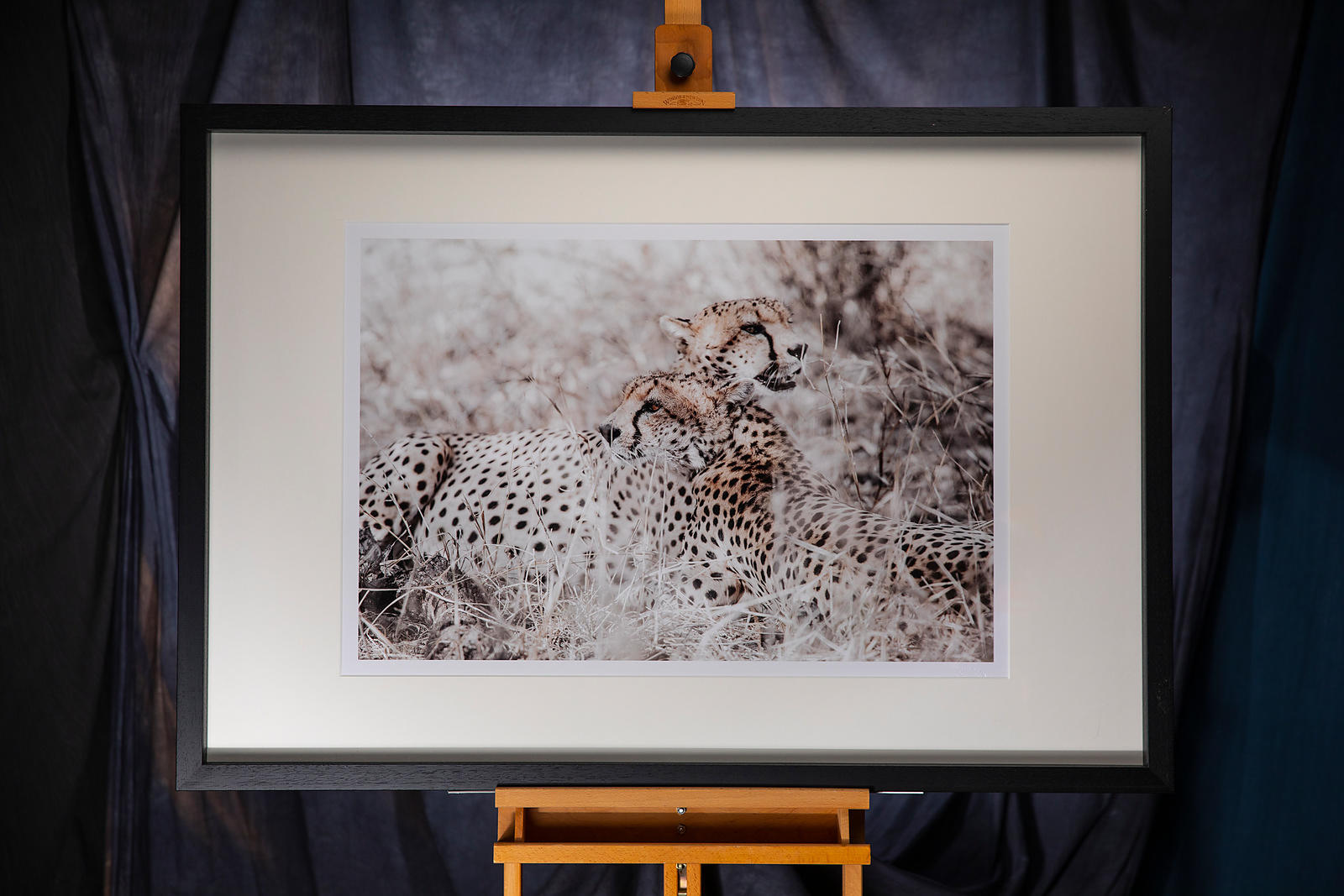 Cheetah: Kenya 2019: Photographer: Neil Emmerson £975 inc UK VAT:  Edition of 25.