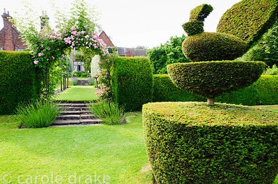 Yew topiary in the form of peacocks. Felley Priory, Underwood, Notts, UK