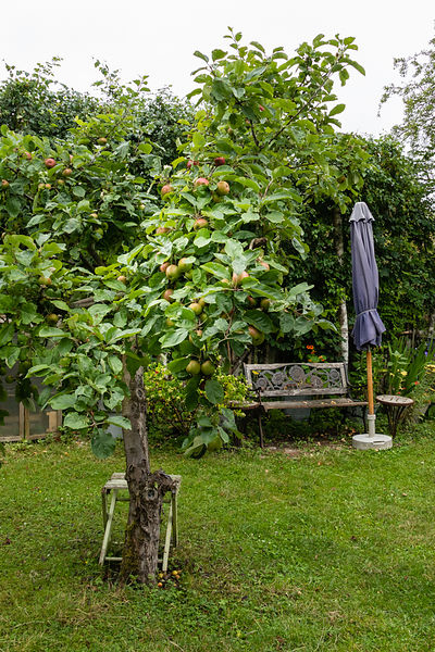 Apples tree with view on bench and parasol