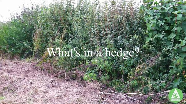 What_is_in_a_hedge_16th_October_2020