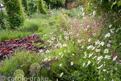 Beds full of lavender, allium seedheads and deep red heuchera with wildflowers such as red campion and oxeye daisies. Littleb...