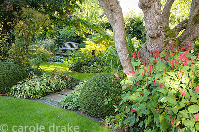 Persicaria and clipped box at the base of an old apple tree with views beyond to bench beside a pond