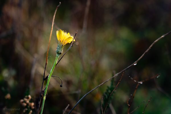 Yellow wildflower fall poetry