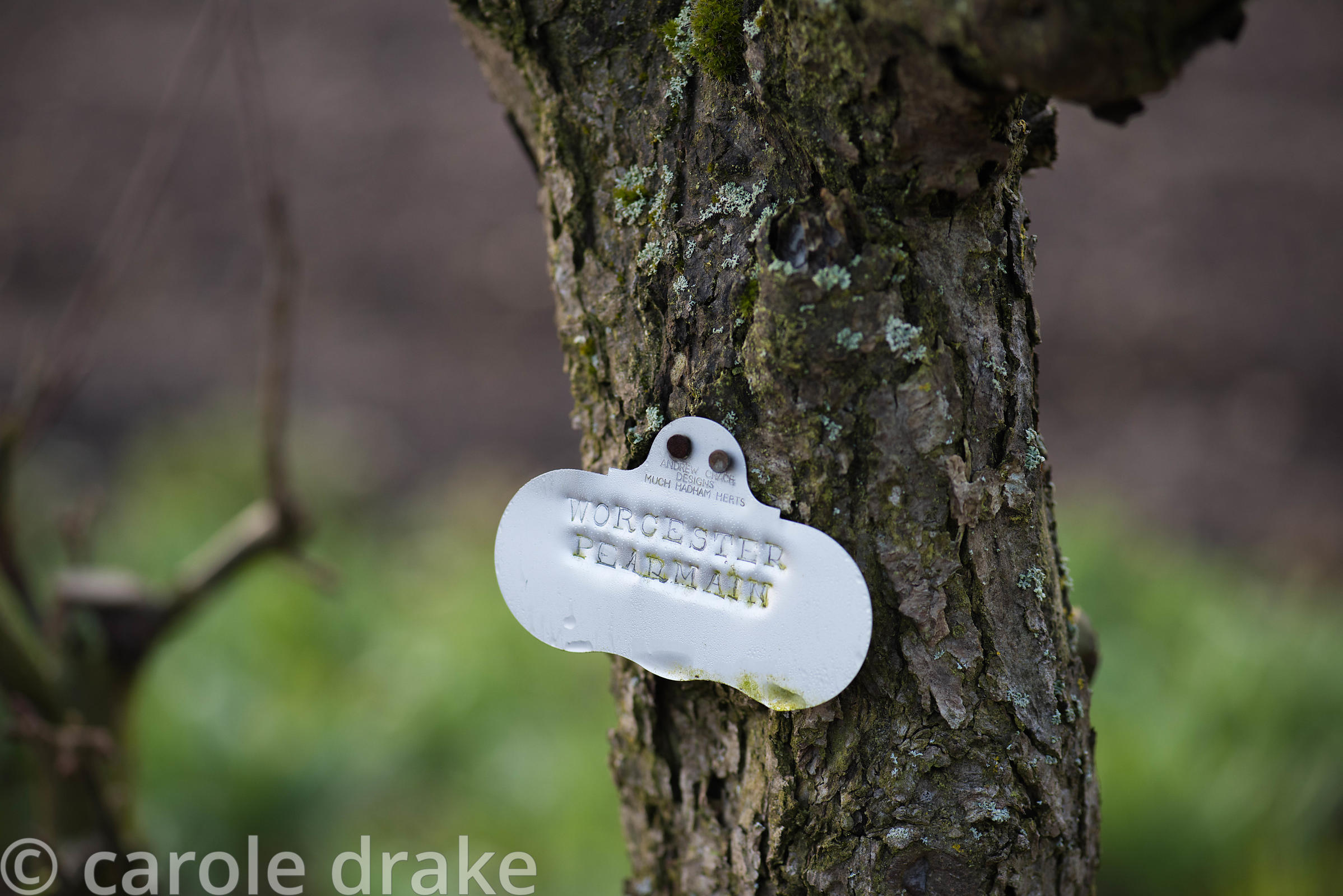 Metal labels on trained fruit trees in the Kitchen Garden at Doddington Hall, Lincolnshire in March