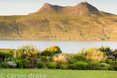 Garden on Little Loch Broom planted with many South African plants at 2 Durnamuck,  Wester Ross in July with Beinn Ghobhlach ...