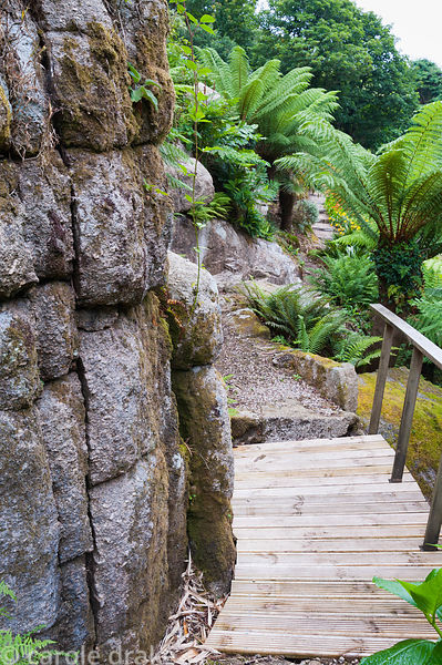 Large granite outcrops are surrounded by lush ferns including tree ferns, Dicksonia antartica.